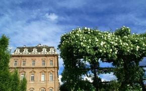 Картинка здание, розы, Италия, Italy, Piemonte, Пьемонт, Венария-Реале, Venaria Reale