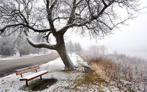Картинка зима, дорога, снег, деревья, туман, скамья