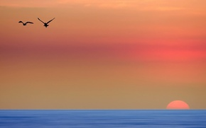 Картинка птицы, утро, небо. море