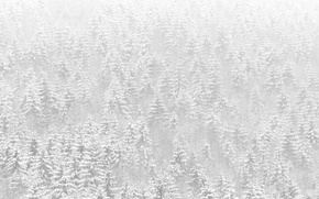 Картинка снег, деревья, природа