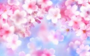 Обои лето, цветы, яркость