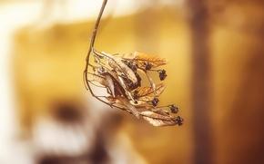 Картинка осень, листья, природа, лист