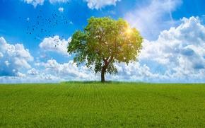 Обои облака, трава, небо, солнце, лето, поле, зелень, птицы, дерево