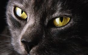 Обои жёлтые, зенки, кот