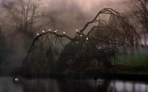 Картинка лес, трава, пейзаж, природа, туман, озеро, рассвет, Птицы, grass, forest, Birds, landscape, nature, wood, lake, …