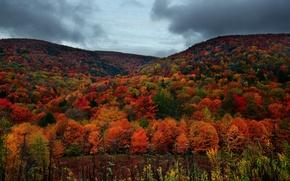 Картинка лес, небо, деревья, горы, тучи, пасмурно, Осень