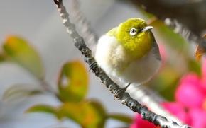 Картинка цветы, птица, ветка, розовые, желтая, оперение