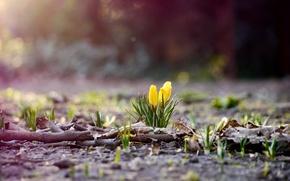 Картинка sun, spring, shine, flovers