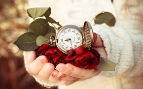 Картинка руки, часы, веты, розы, листья, циферблат, свитер, время