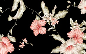 Обои черный фон, рисунок, розовые цветы картинки на рабочий стол, раздел цветы - скачать
