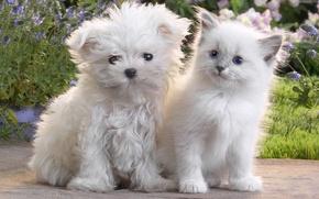Картинка кошка, котенок, собака, щенок, пушистые, Dog, Cat, Kitten, Cute, Puppy