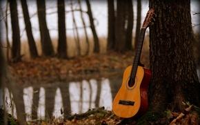 Картинка музыка, дерево, гитара