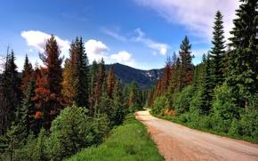 Картинка дорога, лес, деревья, горы