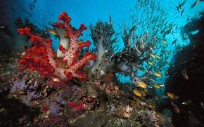Обои водоросли, коралы, рыбки
