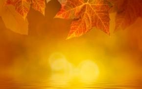 Картинка осень, листья, вода, туман, блики, желтые, кленовые