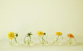 Картинка лето, вода, цветы, желтый, одуванчики, рюмка