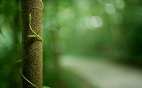Картинка макро, green, жизнь, forest, растения, природа, заповедник trees, деревья, листва, зелень, ствол, life, macro photos, ...