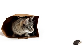 Картинка кошка, мышка, пакет