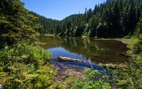 Картинка зелень, лес, деревья, озеро, США, Alaska, Summit Lake