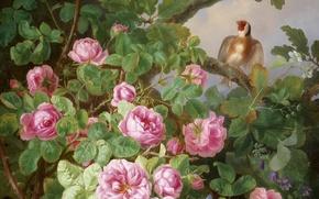 Обои цветы, розовые розы, щегол, птица