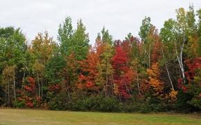 Картинка Осень, Деревья, Лес, Цвета, Fall, Autumn, Colors, Forest, Trees