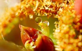 Картинка листья, вода, капли, макро