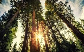 Картинка лес, деревья, закат, forest, trees, солнечный свет, sunlight, прироза