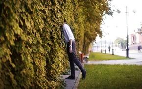Картинка улица, парень, дикий виноград