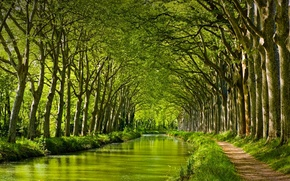 Картинка деревья, Франция, Канал-дю-Миди. Тулуза