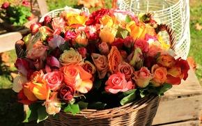 Обои корзина, букет, розы, бутоны, много