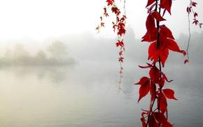 Картинка осень, клен, Спокойствие
