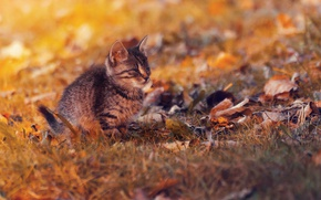 Картинка sunset, cat, autumn, lazy