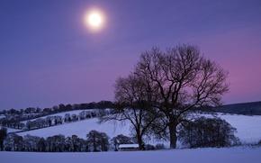 Картинка небо, снег, деревья, ночь, луна, Зима, холм, фиолетовое