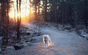 Картинка дорога, свет, собака