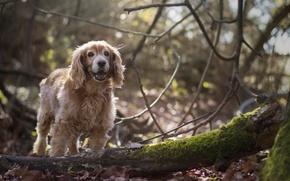 Картинка осень, лес, деревья, ветки, собака, щенок, бревно, боке, обои от lolita777, валежник