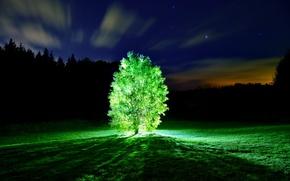 Картинка свет, ночь, Дерево, glowing tree