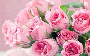 Картинка розы, букет, розовые, крупным планом