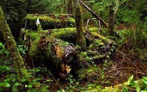 Картинка лес, деревья, время, автомобиль