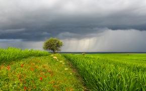 Картинка небо, трава, пейзаж, цветы, тучи, дождь, дерево, луг