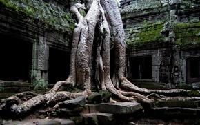 Картинка корни, здание, мох, джунгли, старое, плиты