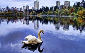 Картинка город, пруд, Лебедь