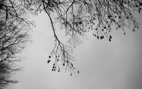 Картинка зима, небо, деревья, ветви, погода