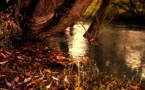 Обои природа, полосы, желтые опавшие листья, озеро, вода, полоски, река, осень