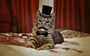 Картинка кошка, кот, животное, пушистый, зверь, ученый, пан кот