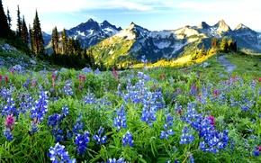 Обои небо, трава, деревья, пейзаж, цветы, горы, природа, весна