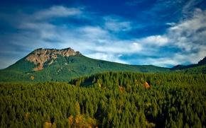 Картинка США, лес, осень, Gifford Pinchot National Forest, небо, облака, Вашингтон, деревья, горы, солнечно