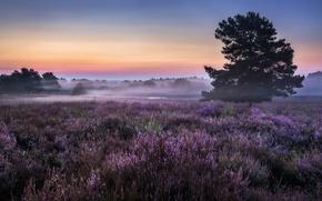 Картинка поле, туман, утро