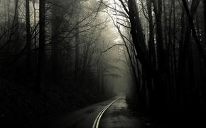 Обои черно-белое, деревья, лес, Дорога