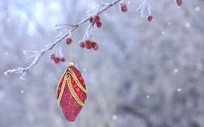 Картинка иней, ягоды, игрушка, новый год, рождество, ветка, плоды, украшение