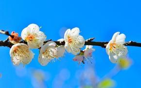 Обои небо, цветы, ветка, весна, сад